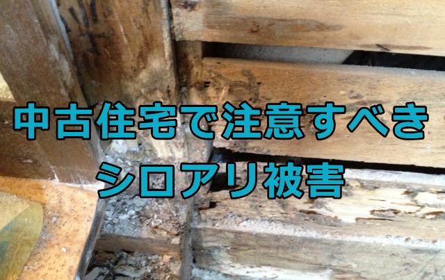 中古住宅で注意すべきシロアリ被害
